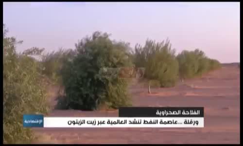 الفلاحة الصحراوية: ورقلة...عاصمة النفط تنشد العالمية عبر زيت الزيتون