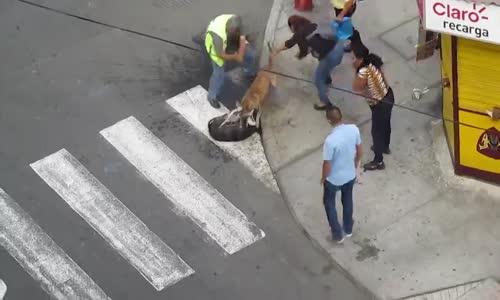 شجار بين كلبين قوي جدا شاهد والناس تحاول فصلهما بدون جدوى