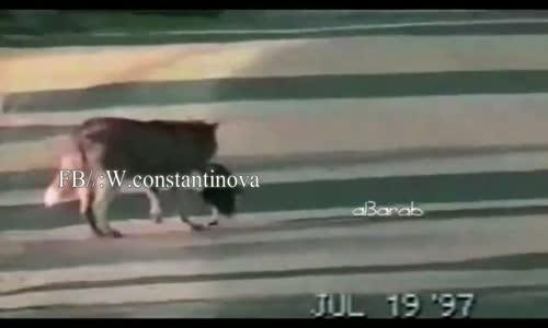 بطة تمثل ميتة على كلب