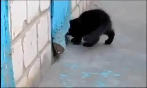 Hero Kitty Cat Helps Dog Escape قط رائع يساعدة في إخراج كلب صغير من حبسه.