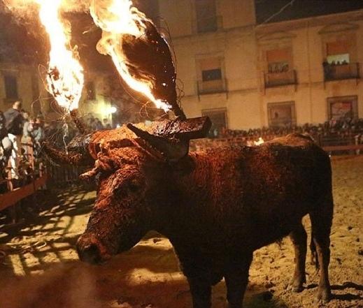 تقاليد واحتفالات أوروبية لتعذيب الحيوانات !
