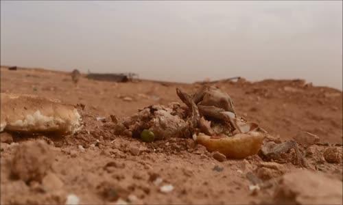 تصوير ذئب ياكل في صحراء الجزائر