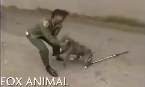 WILD ANIMALS ATTACK HUMAN -- DANGEROUS -- PART 2 -