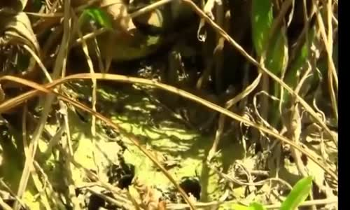 giant anaconda snakes found on Earth