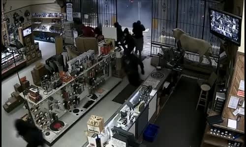 Dramatic Footage of Thieves Ripping Off Gun Store Door, Stealing Weapons In Houston