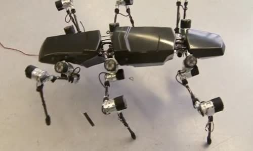 Hector the robot mimics a giant stick insect