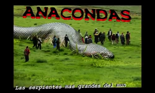 ANACONDAS GIGANTES REALES_ Anacondas mas grandes del mundo – Animales salvajes