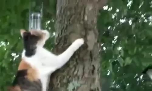 Cat helps kitten