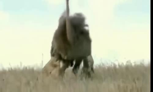 wild animal fights #4