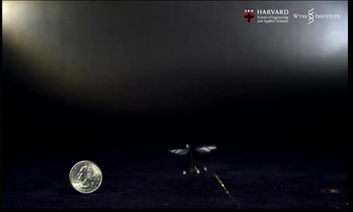 Harvard Scientists Demonstrate First Flight of the Robobee