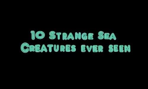10 sea Creatures You Wont Believe Exist