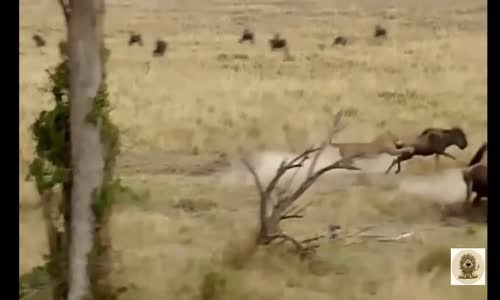 Animal attacks Compilation 2016 - When Animals Attack - Big Battle Animals Real Fight #2