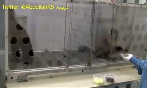 تجربة العدل مع القردة العنب و الخردل هل تقبل القردة اللاعدل