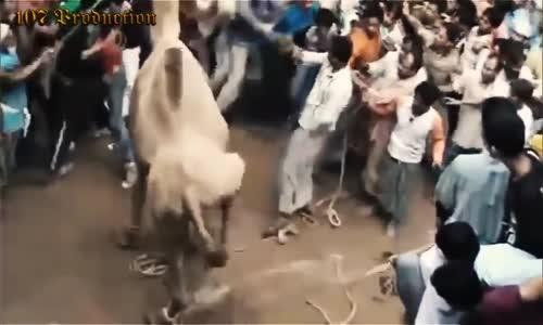 Biggest wild animal fights  funny animals #3