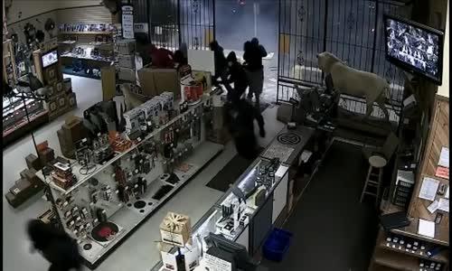 سرقة محل بيع اسلحة بطريقة  عجيبة مايقارب 50 قطعة تم سرقتها من قبل 10 اشخاص  مقنعين