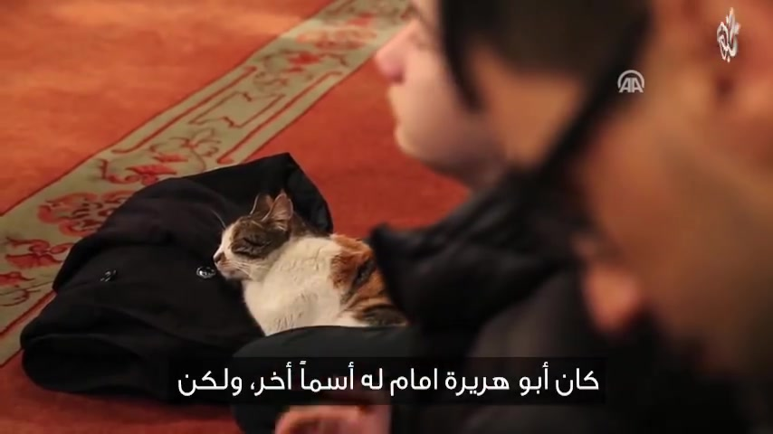 مترجم | قطة تتخذ من أحد المساجد بيتا لها.. تعرف على قصتها مع المصلين بلسان إمام المسجد