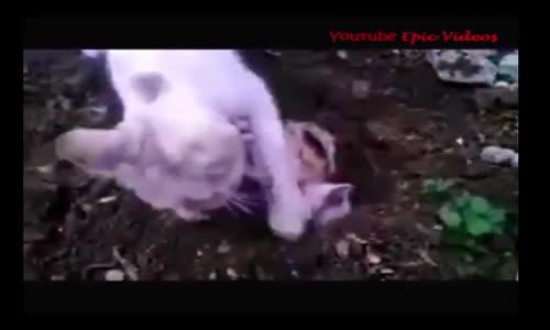 Mother Cat buries Its kitten