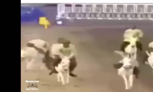 سباق الحمير وفرسانهم الأبطال ههههه