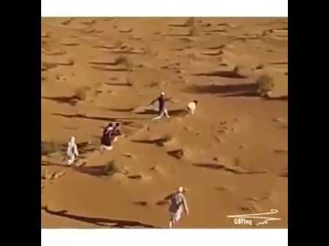 الكبش هرب بتعليق رؤوف خليف هههههههه