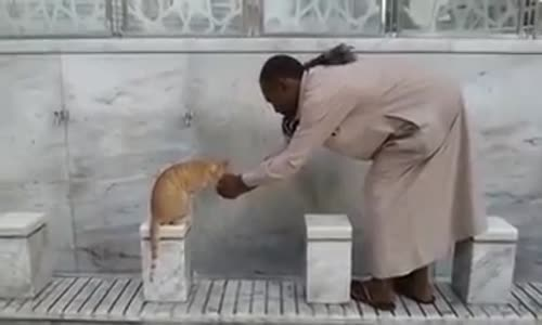 He waited for the Cat to finish drinking then he went to Pray