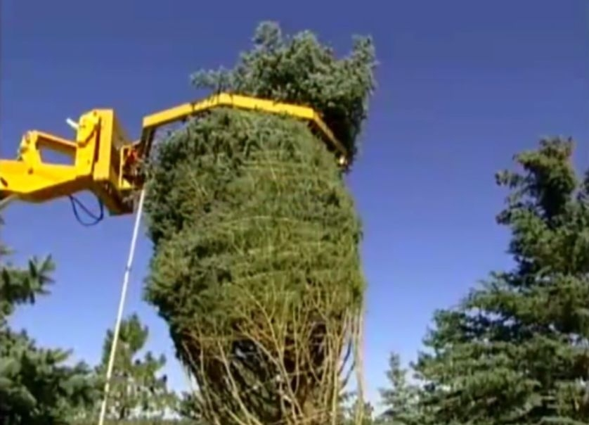 amazing machinery compilation modern tree moving machine in the world
