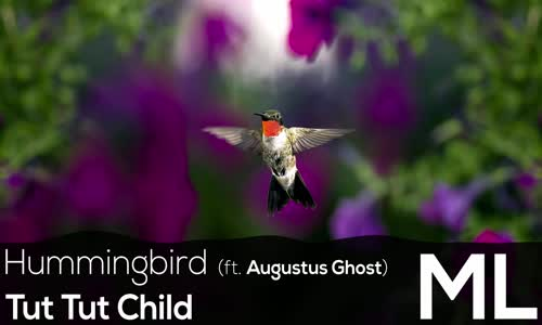 [LYRICS] Tut Tut Child  Hummingbird (ft. Augustus Ghost)