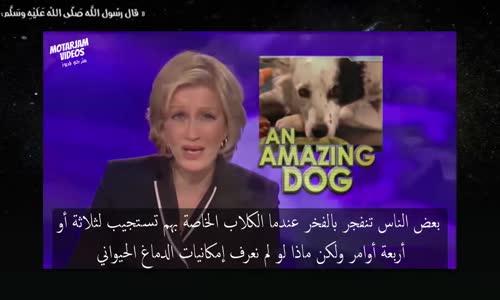 قد يخيفك ذكاء هذا الكلب (مترجم)