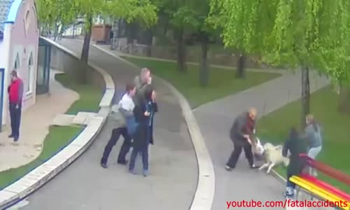 Wolf on Zoo Attacks Two yr old Girl