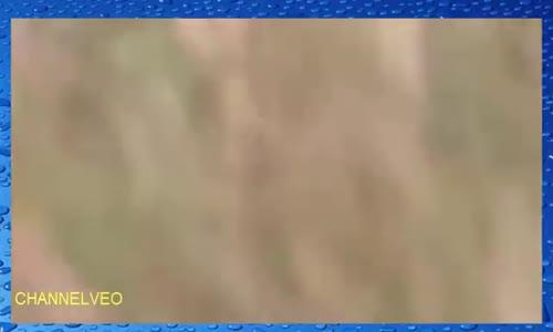 شاهد سرعة الفهد يطارد اسرع غزال بسرعة 120كلم في الساعه
