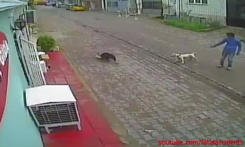Pitbull kills stray cat while it's owner watches
