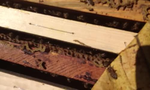 هجوم النحل على فريق برنامج #مشاهد3