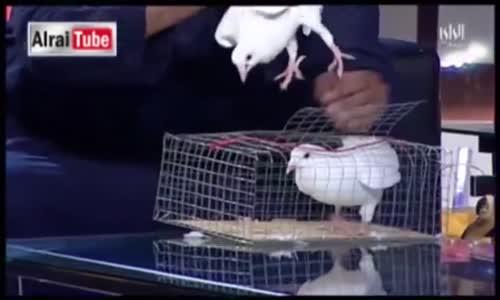 سليمان الجبيلان يفاجئ قناة الراي بحيوانات وأكل على الهواء مباشرة