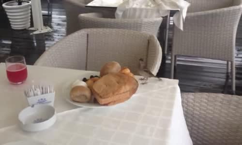 عصفور يأكل فطوري !!