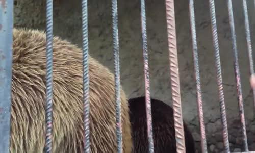 الدب في ألبانيا .. من كواليس برنامج #مشاهد3