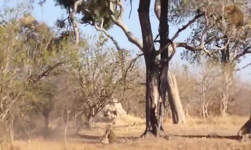 عالم الحيوانات النمور والتماسيح