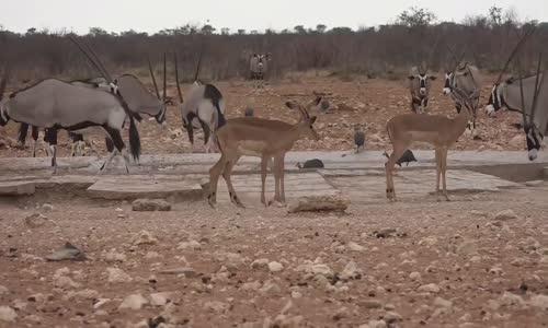 أجمل منتزهات الحيوانات بإفريقيا ناميبيا etocha namibia