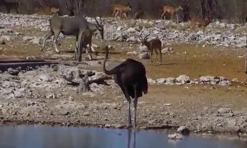 Etocha   namibia       منتزه الحيوانات ايتوشا بناميبيا