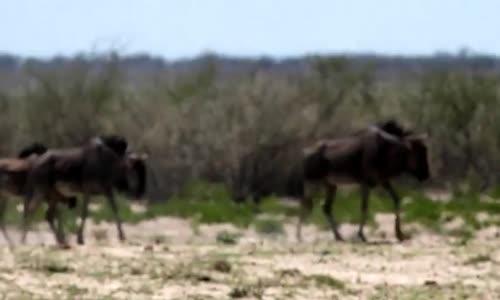 حيوانات ناميبيا namibia etocha
