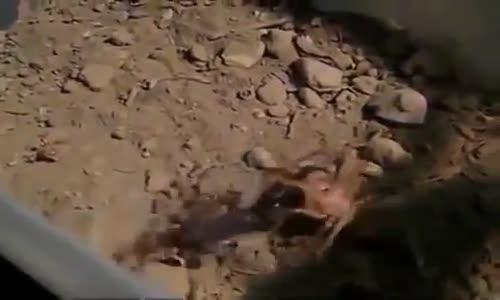 عالم الحشرات العنكبوت والعقرب