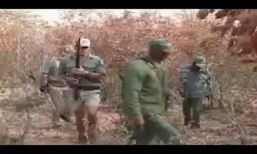 Chasse au lionصيد الأسد بطريقة احترافية