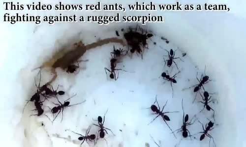 Le monde des iinsectesالعقارب عالم الحشرات