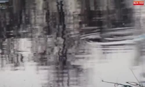 الكلاب البرية و التمساح