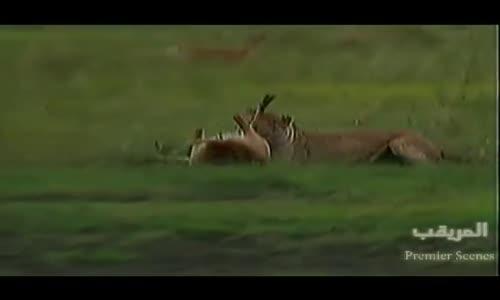 Le monde des animaux sauvagesعالم الافتراس