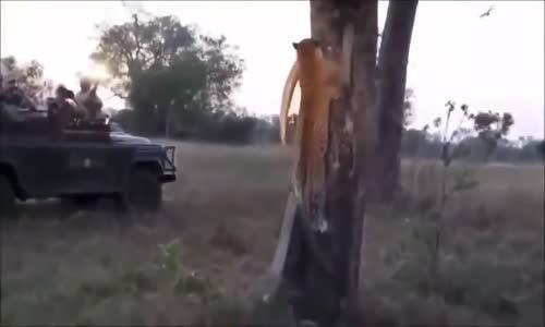 الحيوانات المفترسة le monde des animaux sauvages