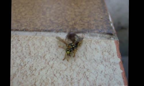عالم الحشرات العنكبوت والدبور