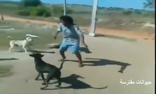 كلاب شرسة تهاجم البشر اا مقاطع قوية ومضحكة لهجوم الكلاب على البشر