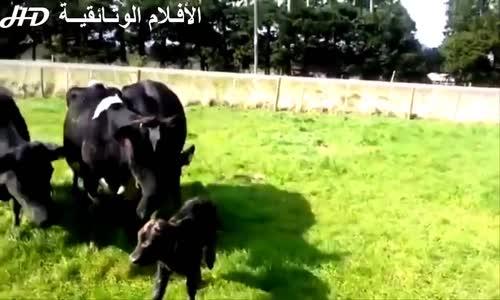 اقوى المقاطع لهجوم حيوانات مفترسة على البشر لعام   الجزء 2 HD