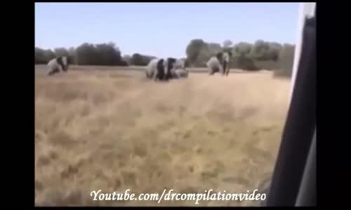 اقوى المقاطع لهجوم حيوانات مفترسة على البشر لعام  الجزء 3 HD