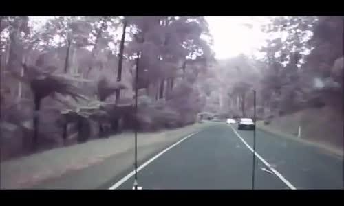 #فيديو _ سائق ينجو بأعجوبة من سقوط اشجار عملاقة على الشارع