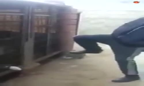 فيديو_ شاب تحرش بكلب في القفص شاهد ماذا حصل له !!